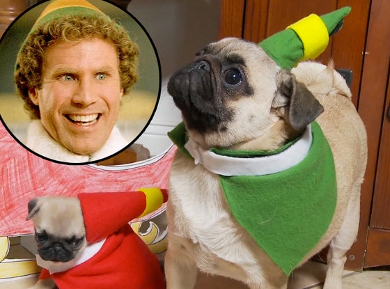 Will Ferrell, Elf, Pug