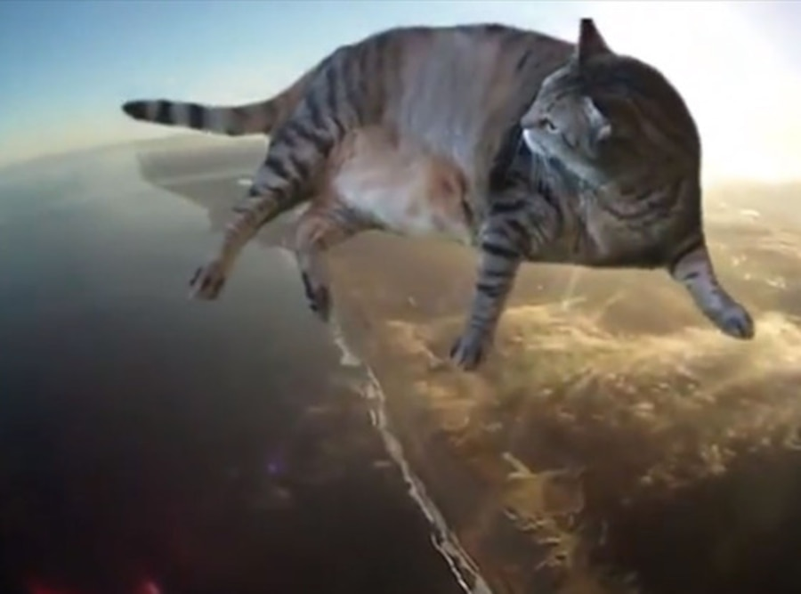 Dream Cat