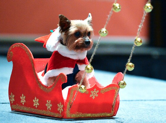 Yorkie Dog, Christmas Animals