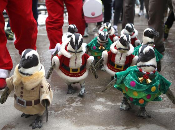 Penguins, Christmas Animals