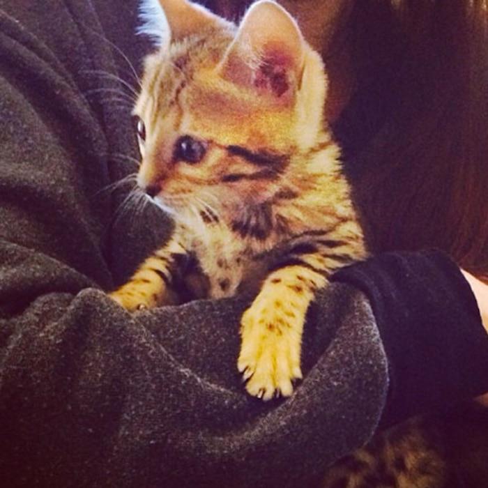 Kourtney Kardashian, Cat