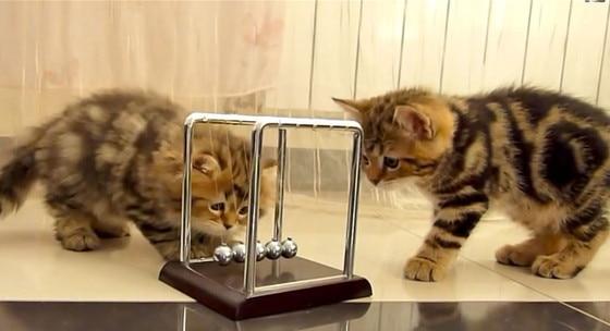 Kittens Newtons Cradle