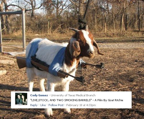 Caption This Goat