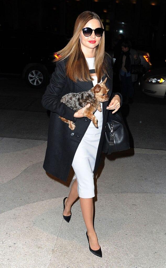 Miranda Kerr, dog