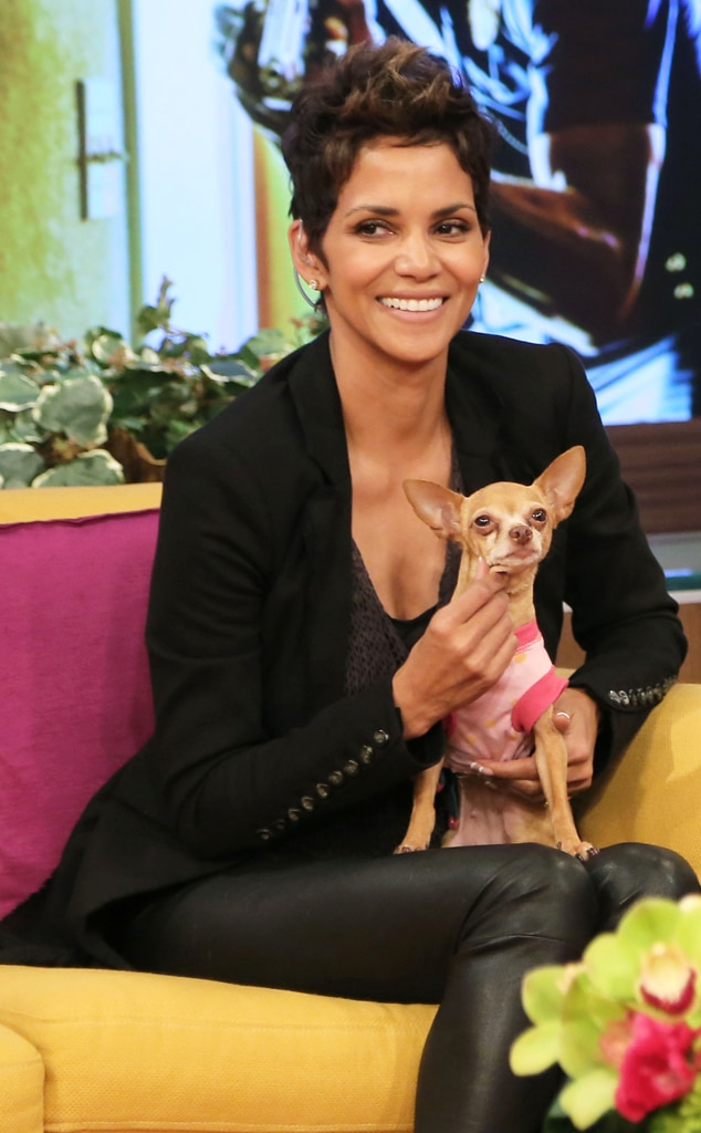 Halle Berry, Univision