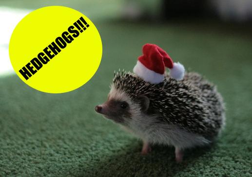 Hedgehog Soup