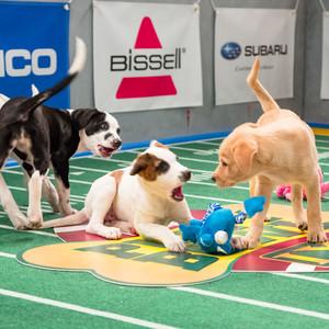 Puppies, Puppy Bowl