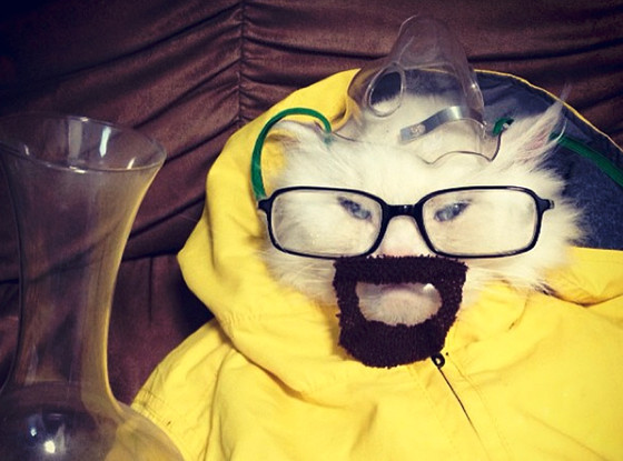Breaking Bad, Cat
