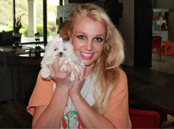Britney Spears, Dog, Twit Pic
