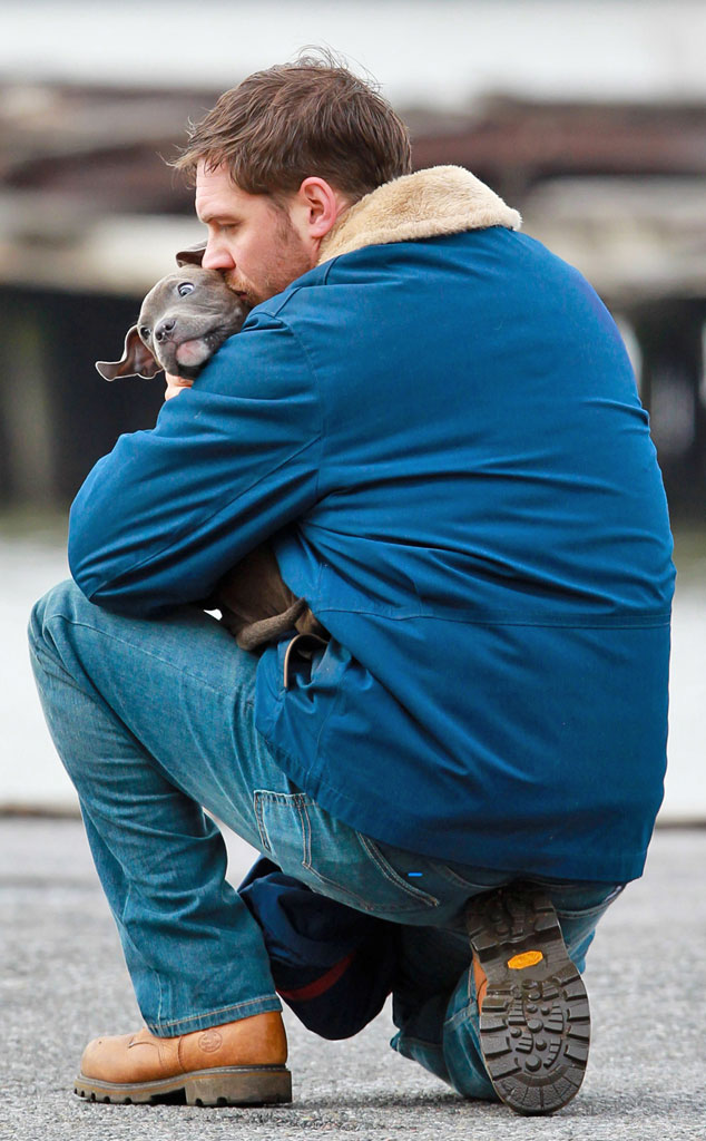 tom hardy loves dogs bonded with the drop puppies�see