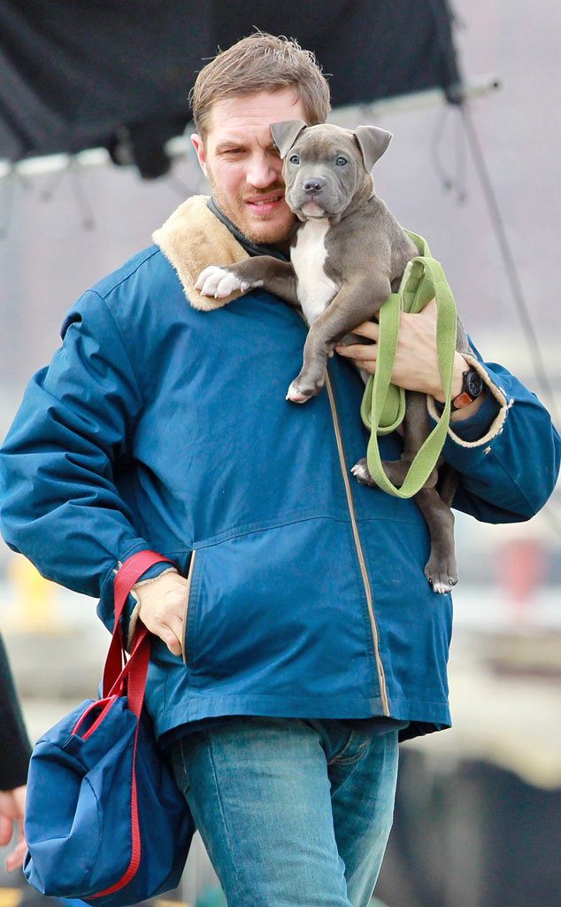 Tom Hardy Loves Dogs Bonded With The Drop Puppies See
