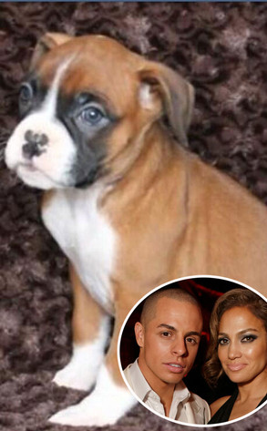 Jennifer Lopez, Casper Smart, Puppy, Boxer