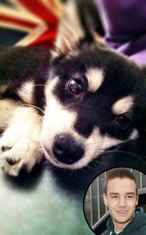 Liam Payne, Puppy, Twit Pic