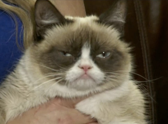 Grumpy Cat, E! News