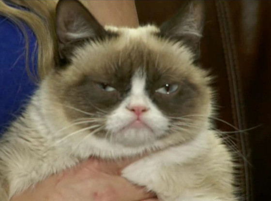 Grumpy Cat, E! News