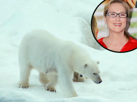 Meryle Streep