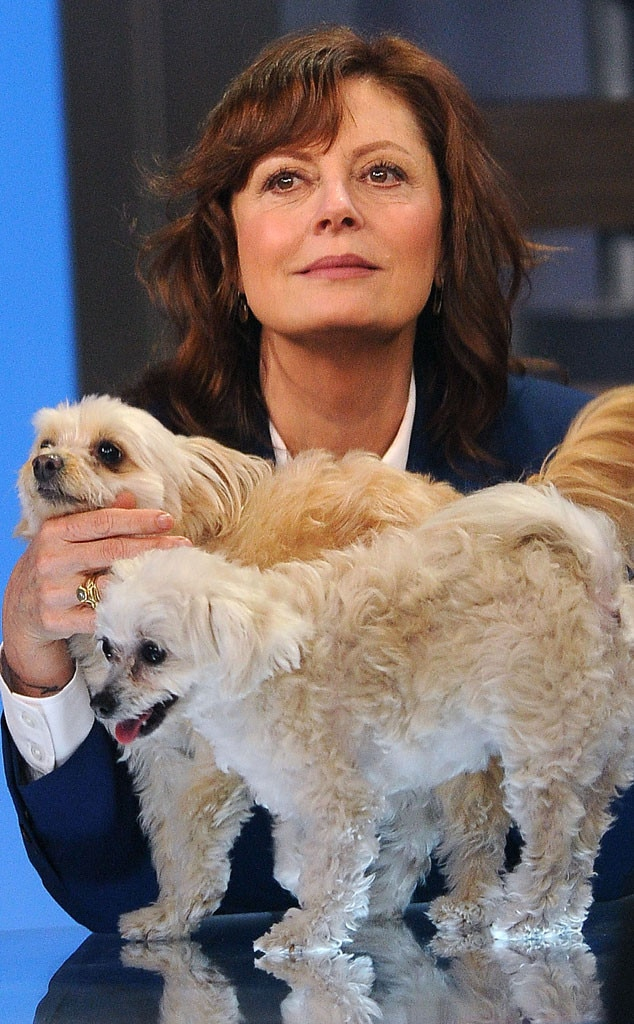 Susan Sarandon, Dogs