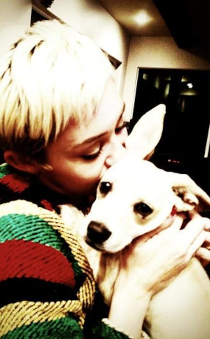 Miley Cyrus, Dog, Twitter