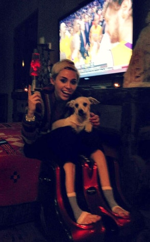 Miley Cyrus, Dog, Twitter
