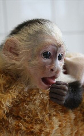 Justin Bieber, Mally, Monkey