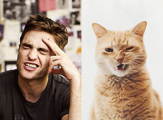 Robert Pattinson, Cat, Tumblr