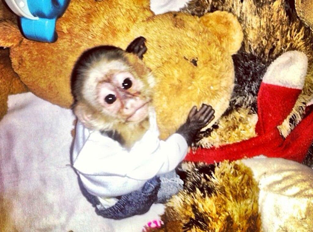 Justin Bieber, Monkey