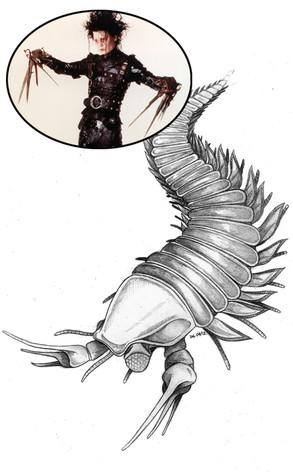 Johnny Depp, Fossil, Kooteninchela deppi