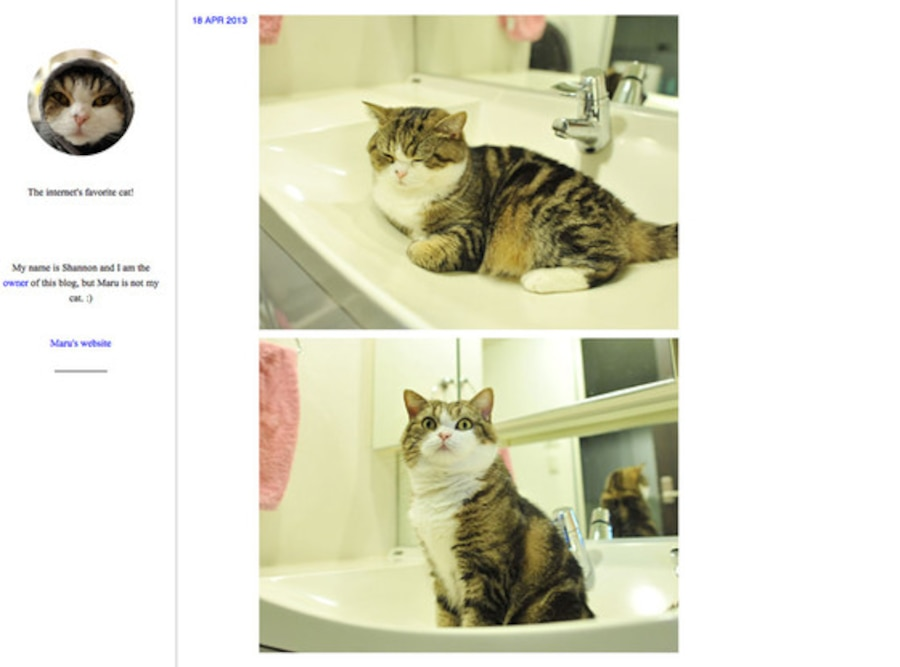 Maru the Cat, Tumblr