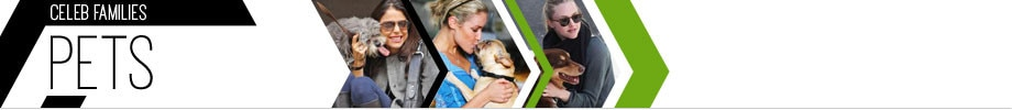 Pets Banner