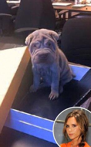 Victoria Beckham, Dog, Twit Pic
