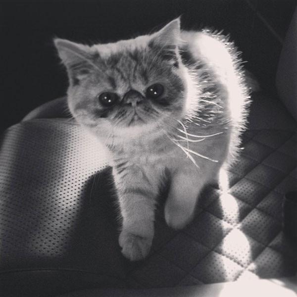 Justin Bieber, Cat, Instagram