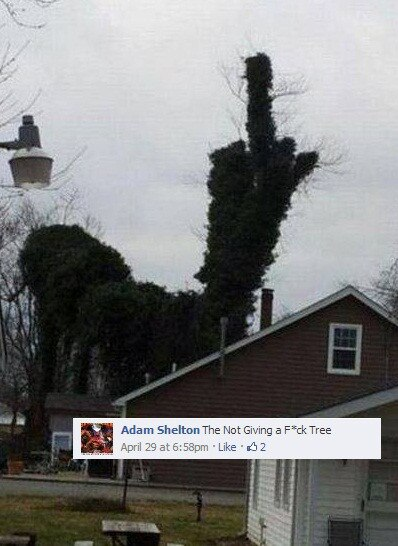 Caption This Winner Tree