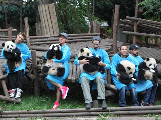 Backstreet Boys, Pandas