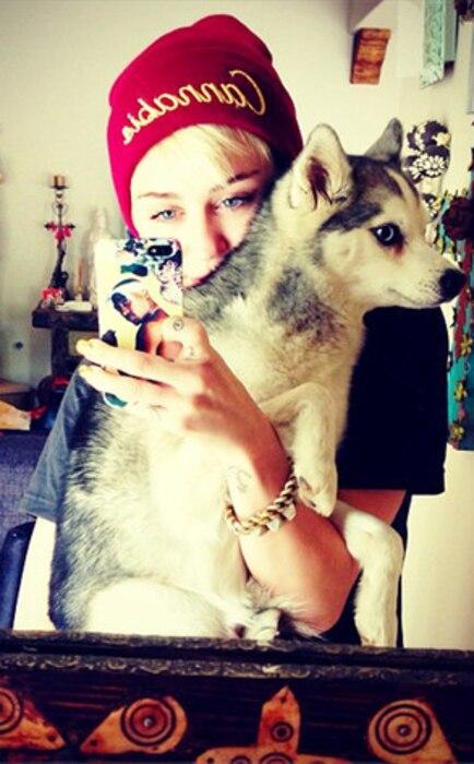 Miley Cyrus, Dogs, Instagram