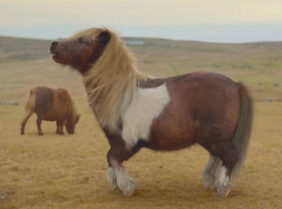 Dance Pony