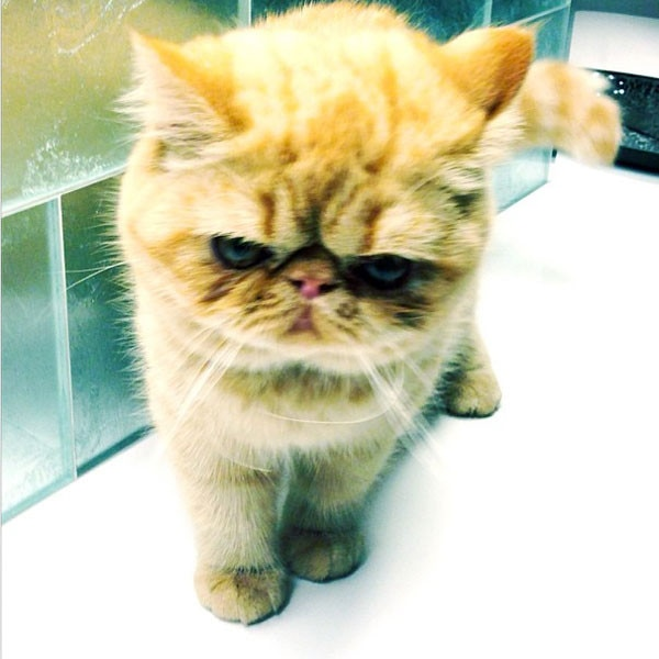 Justin Bieber, Cat, Instagram