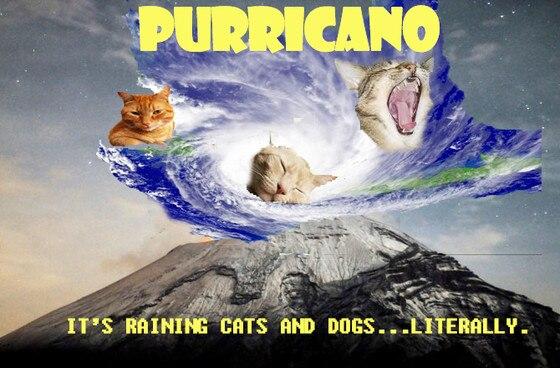 purricano