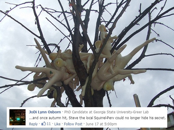 Rubber Tree Captioned