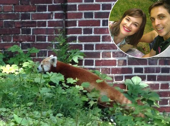 Ashley Foughty, Red Panda