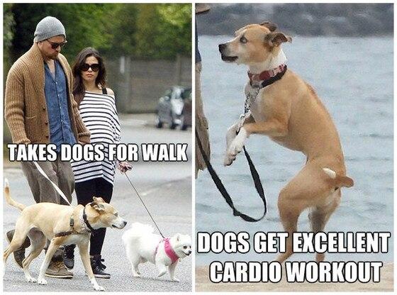 Tatum Dogwalker