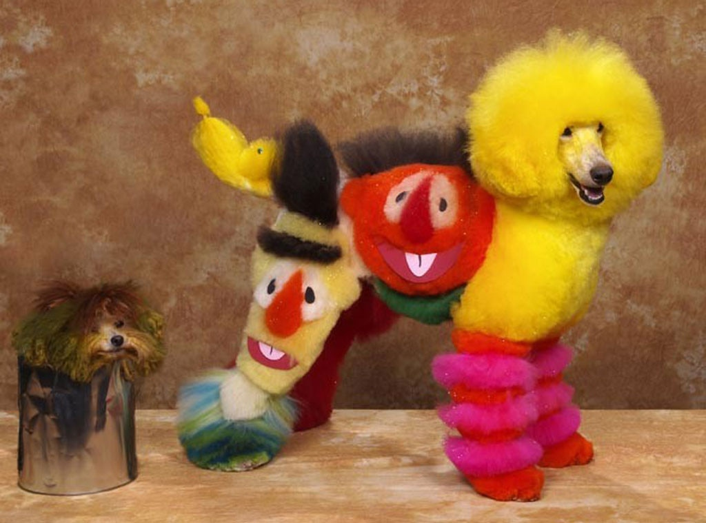 Dyed Dogs