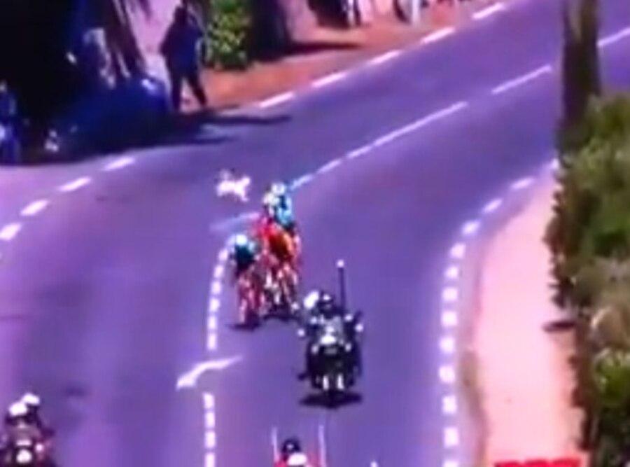 Tour de France Dog