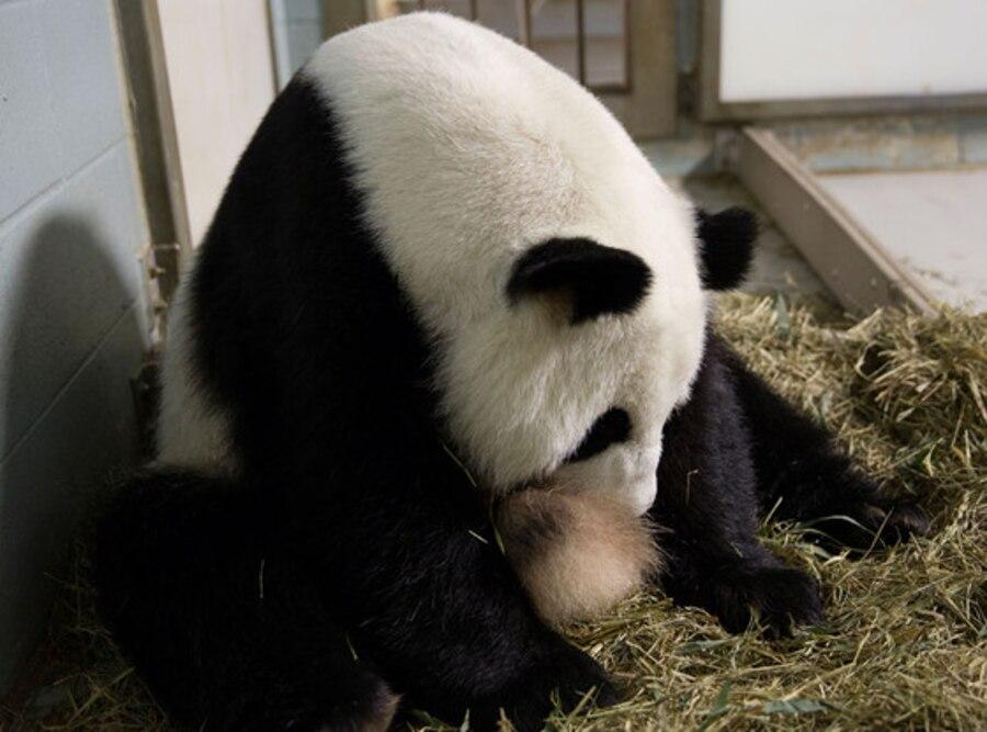 Lun Lun, Panda Twins