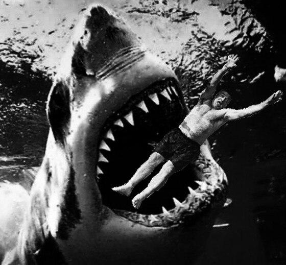 Alec Baldwin Photoshop Shark 2