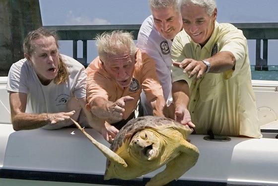 Caption This - Turtle