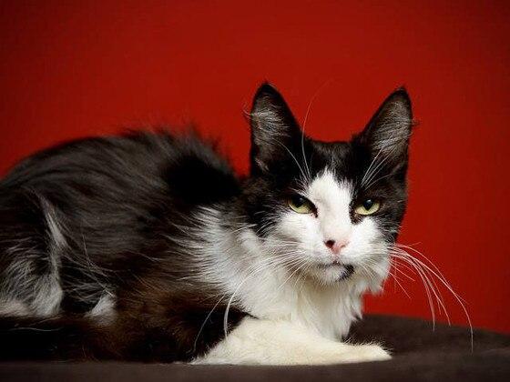 Pet Adoption Widget