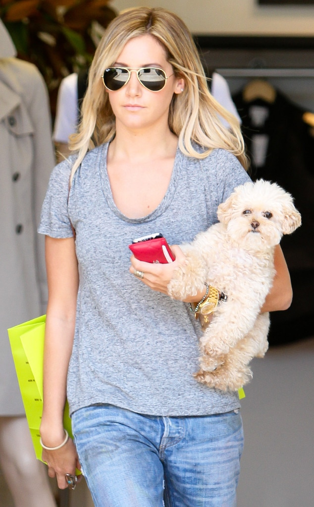 Ashley Tisdale, Dog