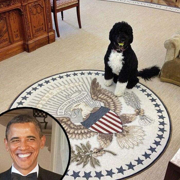 President Barack Obama, Bo the Dog