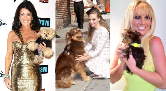 Celebrities, Dogs