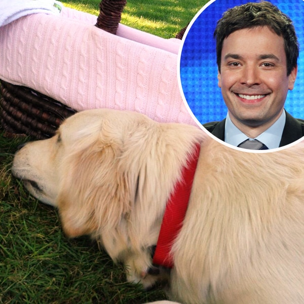 Jimmy Fallon, Dog